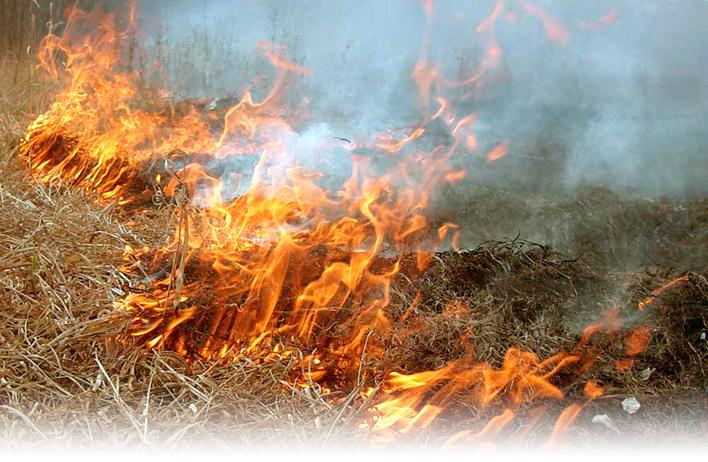 Почему НЕ надо весной сжигать сухую траву - фото-иллюстрация