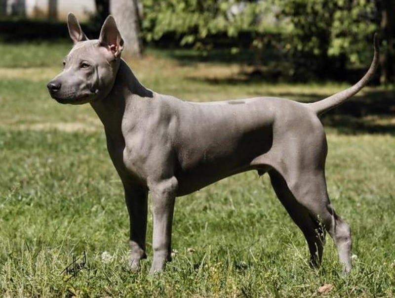 ТОП-20 самых дорогих пород собак в мире