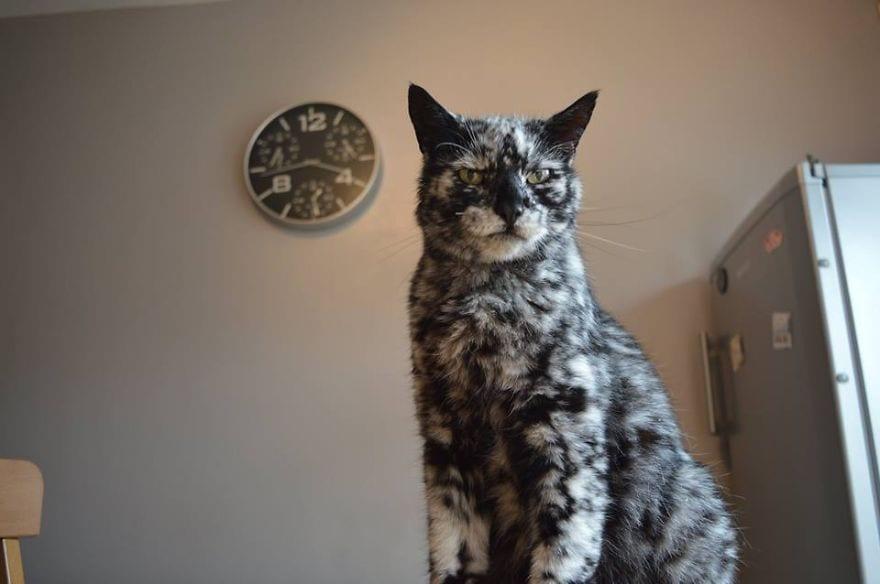 Кот родился черным, а с возрастом стал почти белым