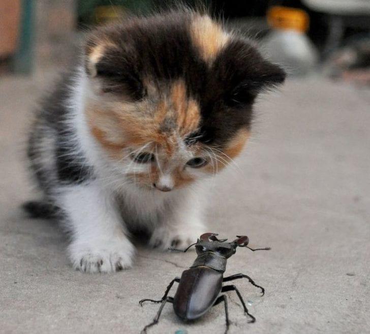 Маленький котенок не смог спасти застрявшего жука и позвал на помощь