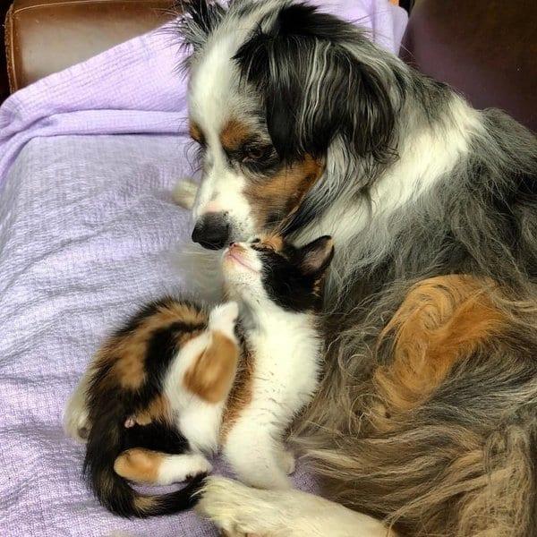 Пес очень грустил по своему другу-коту, и хозяйка сделала ему сюрприз