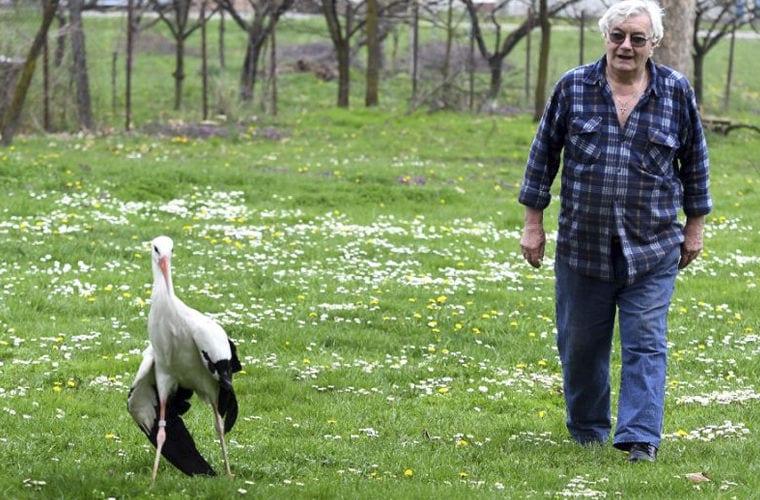 Аист уже 16 лет каждый год возвращается к своей любимой, которая не может летать