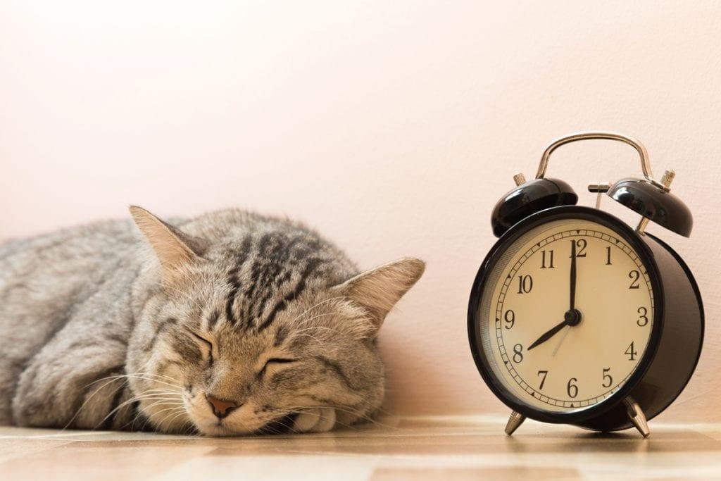 Как я отучила кошку мешать мне спать