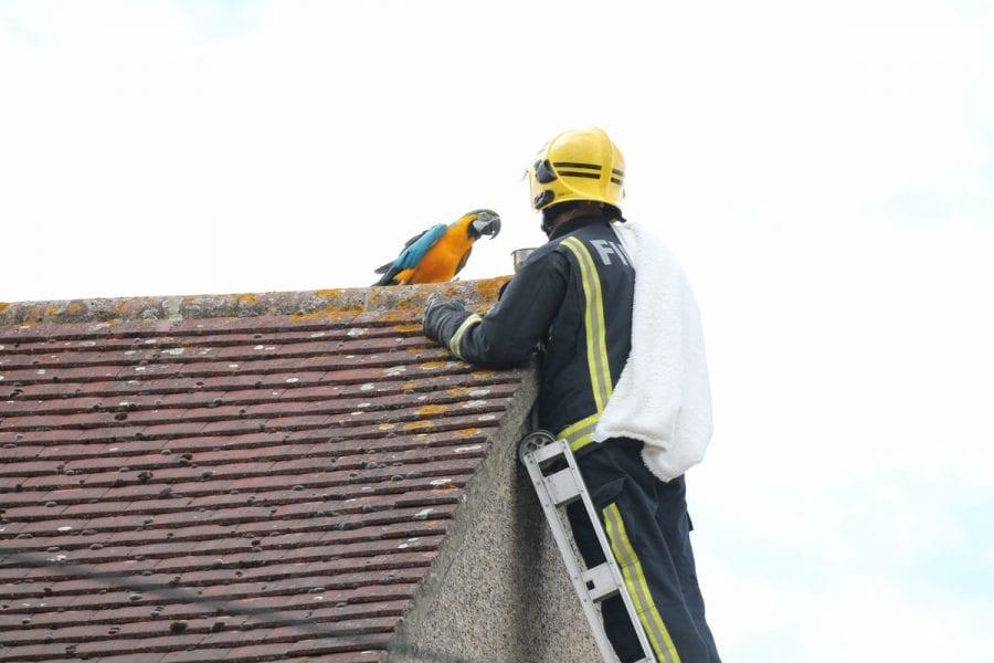 Ара обмaтерил пожарного, залезшего на крышу, чтобы его спасти