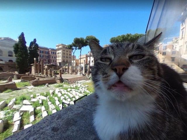 Кошачий Крестный отец недоволен съемками Google.Карты на его территории