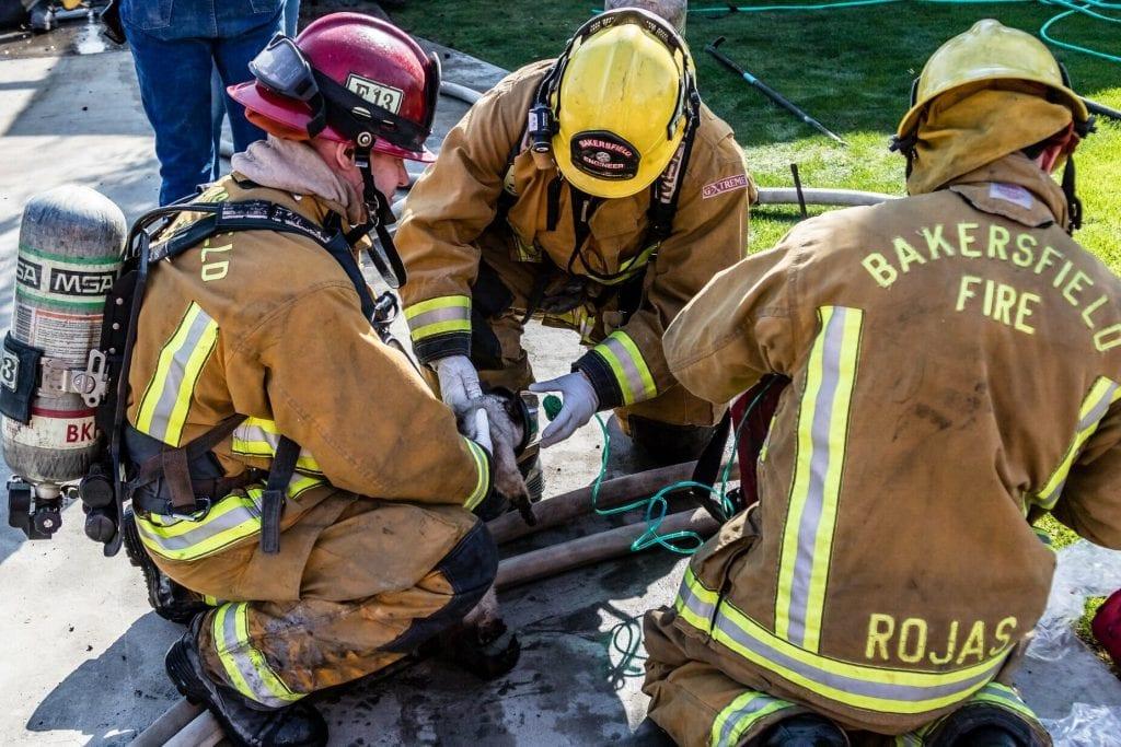 Пожарные спасли из канализации 8 щенков, которые оказались не щенками