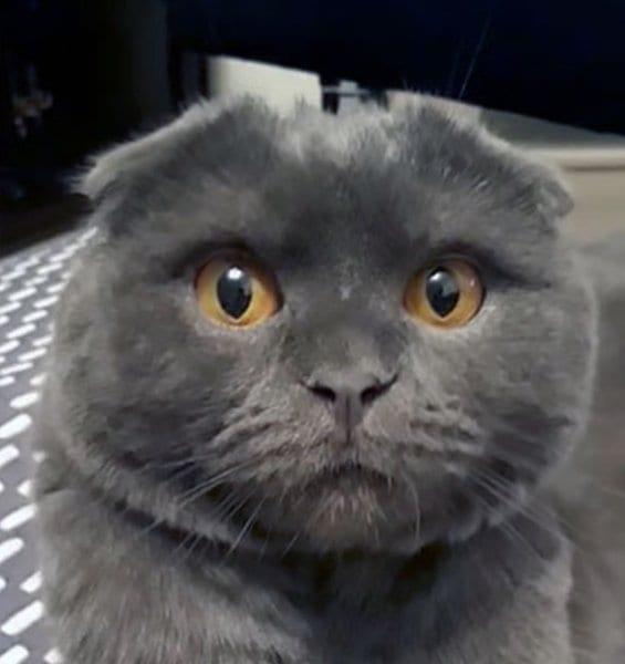 """ВИДЕО: Кот не раскаивался в проступке, пока ему не пригрозили """"страшным"""" наказанием"""