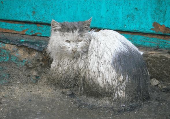 Кошка два года сидела в луже, ожидая возвращения хозяев