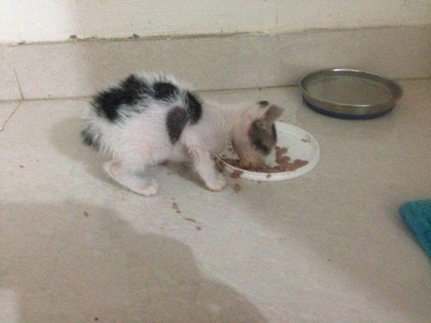 Бездомный котенок горько плакал, зовя свою маму, и только одна женщина смогла его утешить