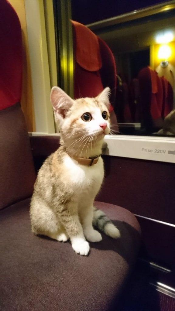 Потерявшийся котёнок самостоятельно сел на поезд, чтобы вернуться домой