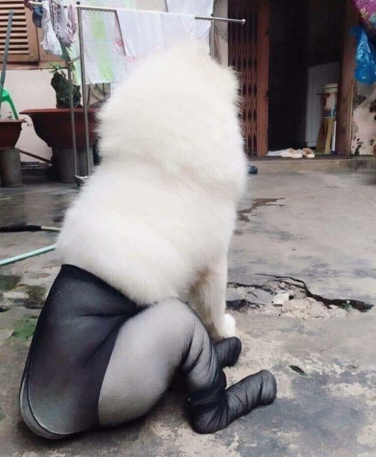 28 доказательств, что самоеды - самая желанная и смешная порода собак