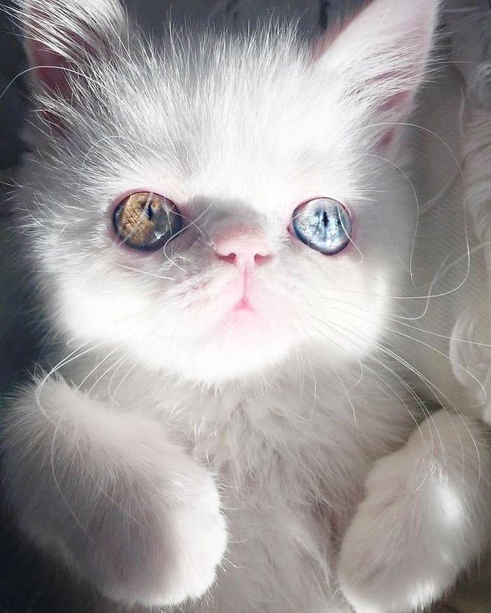 Кошечка с завораживающим взглядом украдет ваше сердце