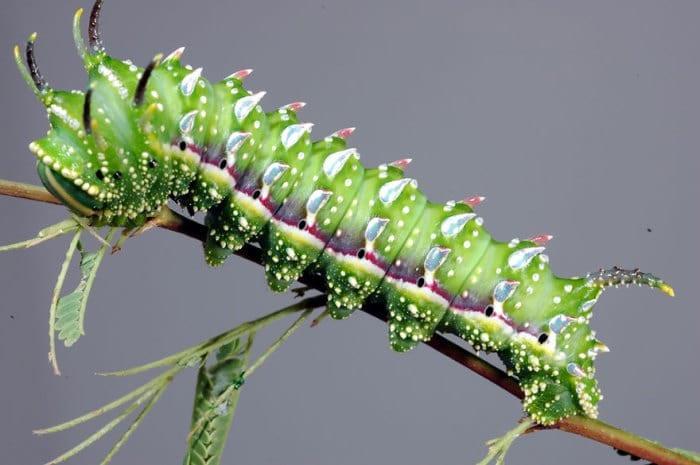 19 фото гусениц и бабочек, в которых они превратились