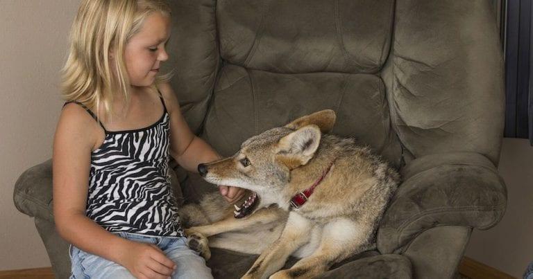 Отец подарил дочери щенка, который оказался не собакой