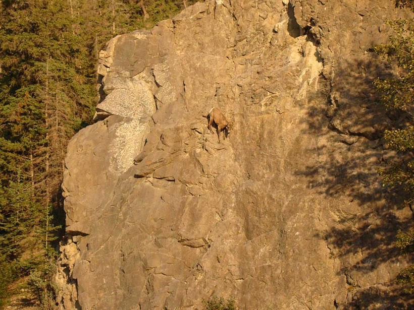 17 фото безбашенных горных козлов