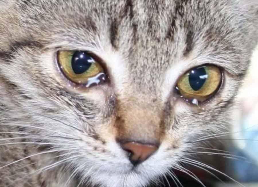История котика Мурзика, брошенного на даче