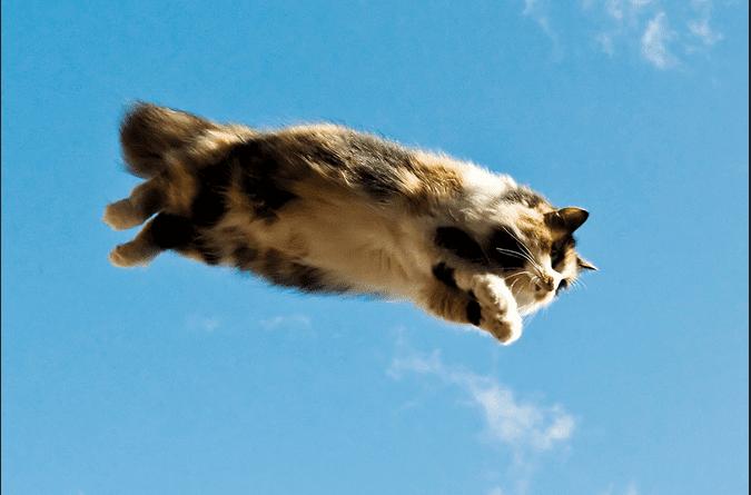 24 фотодоказательства, что летать умеют не только птицы