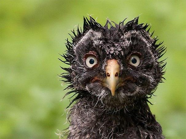 21 фото животных, где они точно не получились!