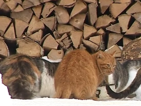 Сельский житель спас 36 кошек от гибели