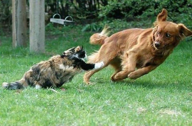 24 уморительных фото котов и собак, вынужденных жить вместе