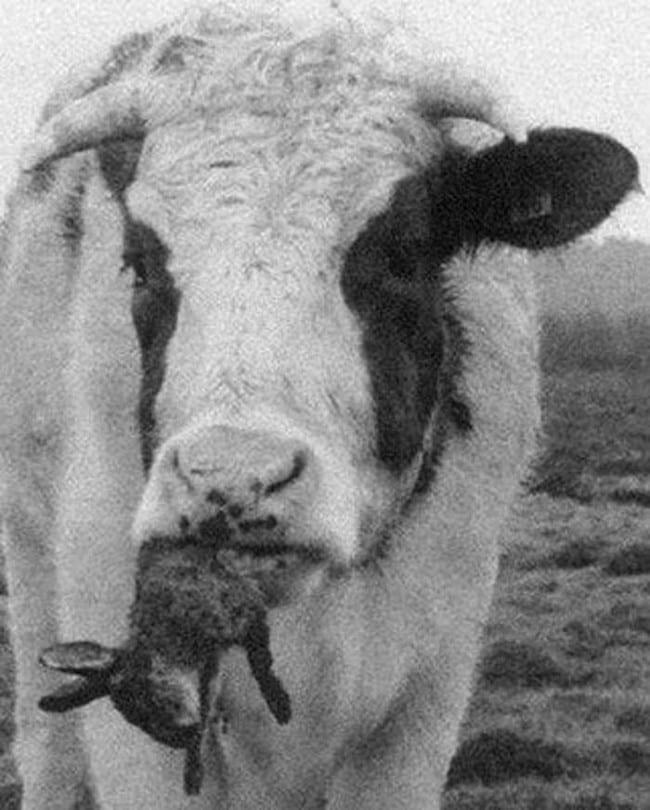 14 фото о том, что мире животных нет ничего однозначного