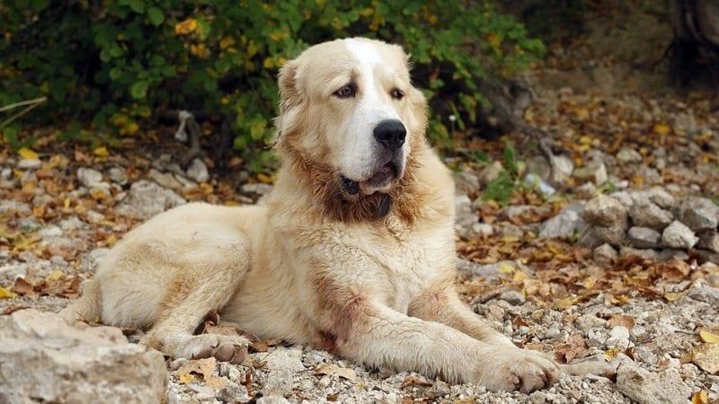 Как старый пес Будулай помирил враждующих соседей