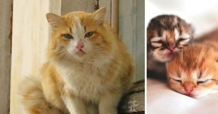 ВИДЕО: Пес принял сложные роды у кошки, покорив Интернет