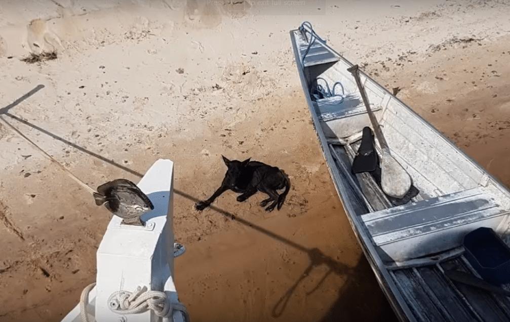 Речной путешественник обнаружил на необитаемом острове брошенную собаку
