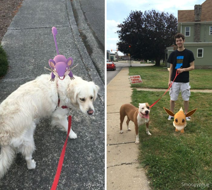 Как десятки собак нашли дом благодаря игре по ловле покемонов