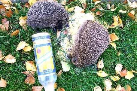 Ежики распивали алкoгольные напитки на детской площадке и загремели в вытрeзвитель