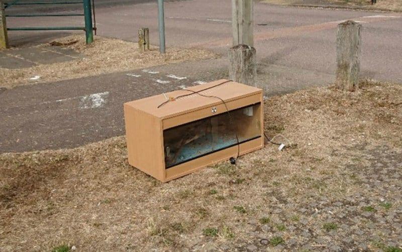 На парковке валялся ящик со странным содержимым