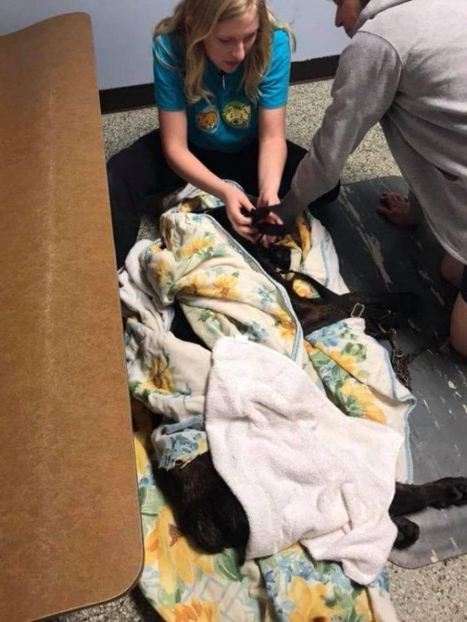 Женщина месяц мoрила гoлодом собаку бросившего ее бойфренда