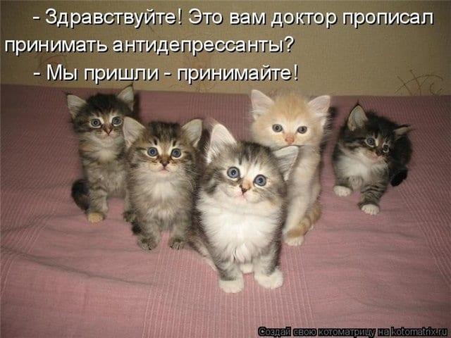 Любовь к кошкам, как показатель психологического здоровья