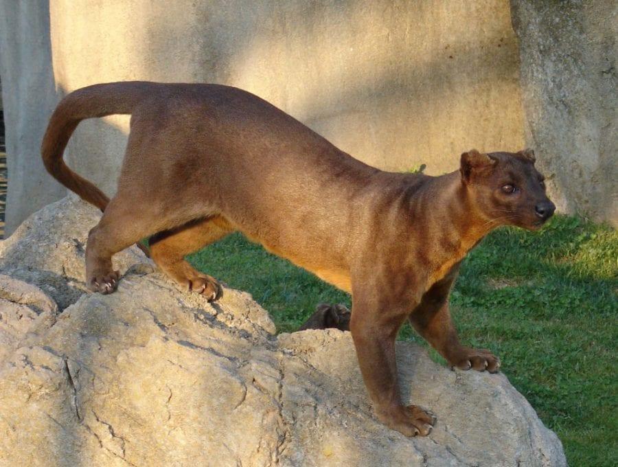 29 фантастических животных, которые существуют на самом деле