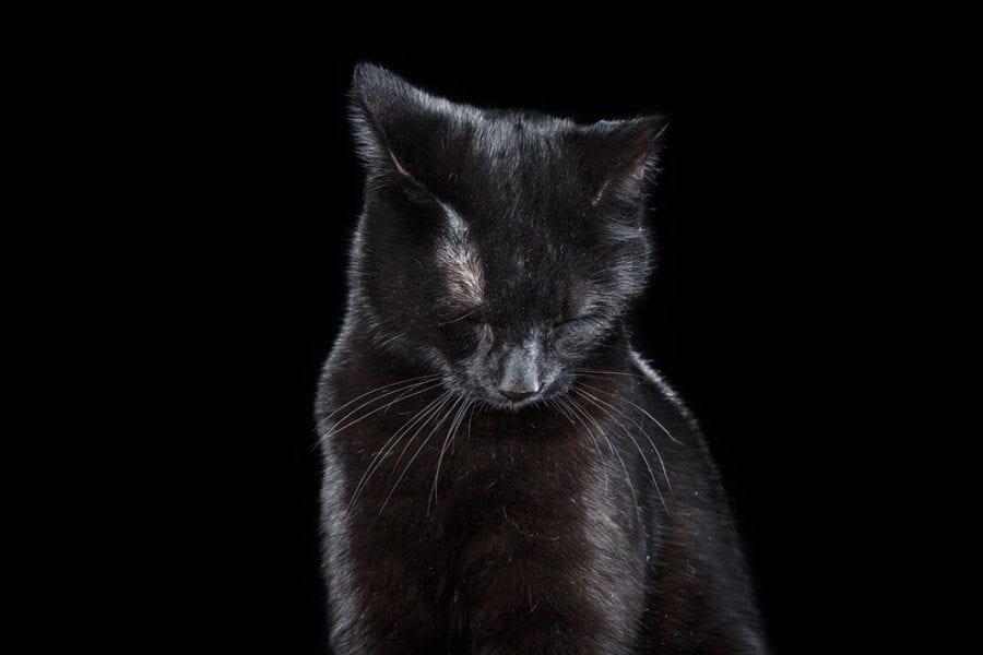 20 фото котов, подтверждающих, что они - личности!