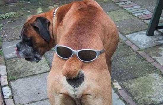 26 фото о том, как трудно собакой или кошкой