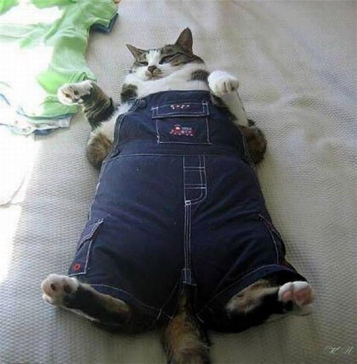 """24 фото из серии """"Я - Кот! И мне все можно!"""""""