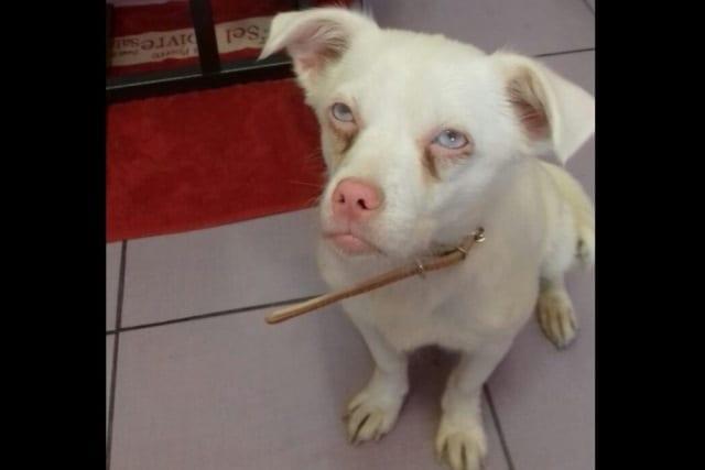 Найденная в Новосибирске собака-унывака ищет дом