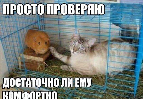 23 кота, которым хозяева подложили свинью