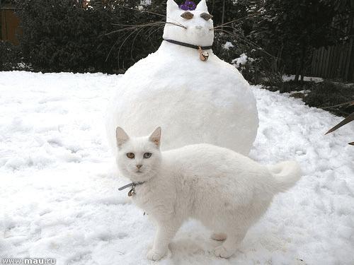16 котов, не готовых проститься с зимой