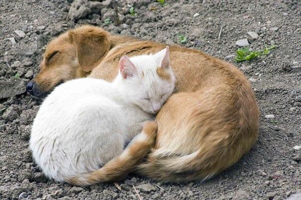 35 фото котов, принявших собаку за подушку