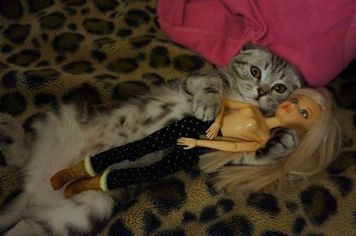 26 смешных фото животных