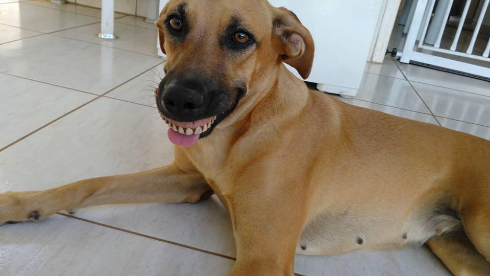 Собака пришла со двора с необычной находкой, и ее хозяин чуть не лопнул от смеха