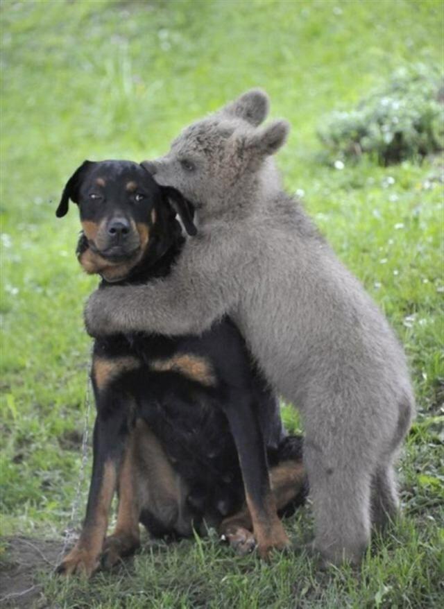 14 очень грозных животных. И не надо смеяться!