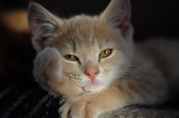 12 фото котов, которые выслушают вас лучше психотерапевтов