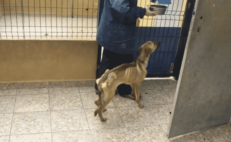 Случайная встреча спасла собаку, а человеку подарила верного друга