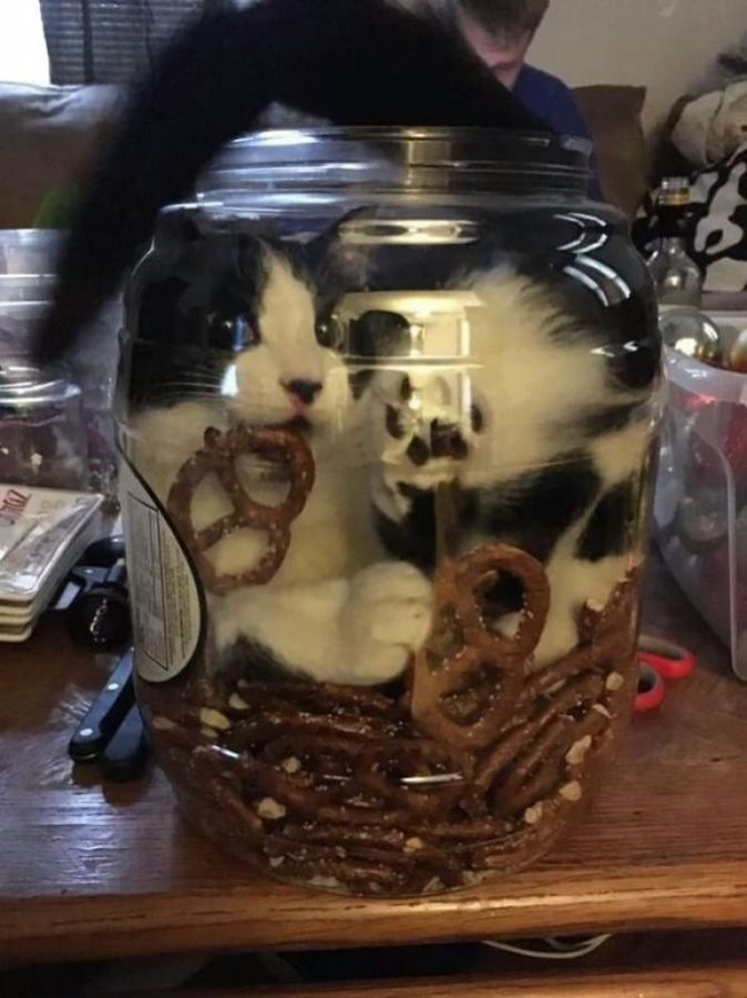 Коты-повелители и просто командиры - 21 поразительное фото