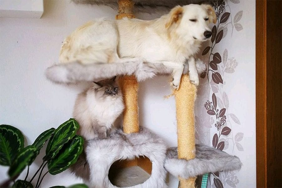 16 собак, которые столкнулись с вопиющей несправедливостью