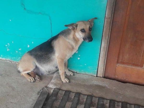 Хозяева переехали, бросив беременную собаку. Она месяц сидела под дверью
