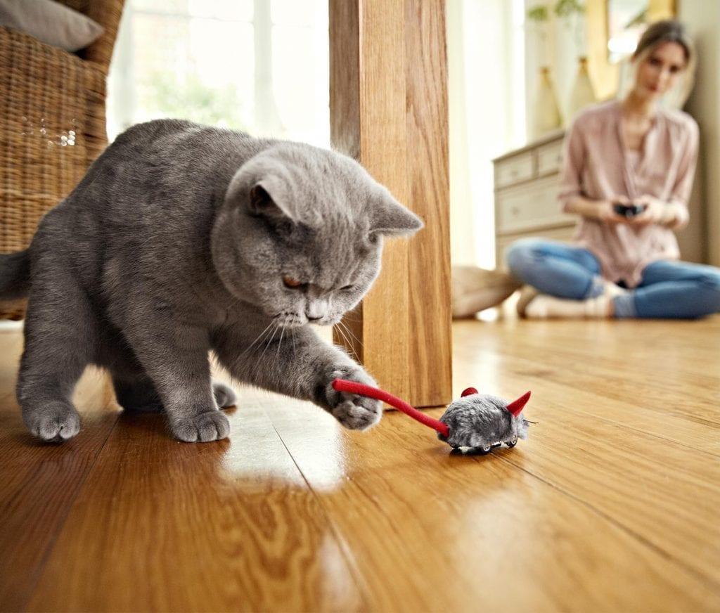 Хозяйка принесла коту замечательную игрушку, но не ожидала от него такой реакции
